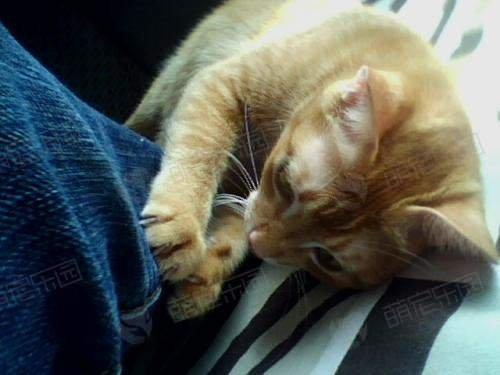 猫咪为什么会玩自己的尾巴?